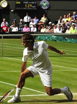 Federer erba